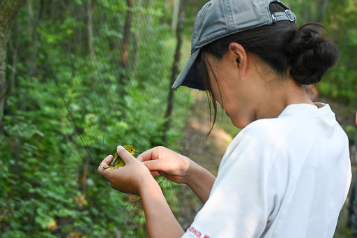 20190723 bird banding nature center 7745