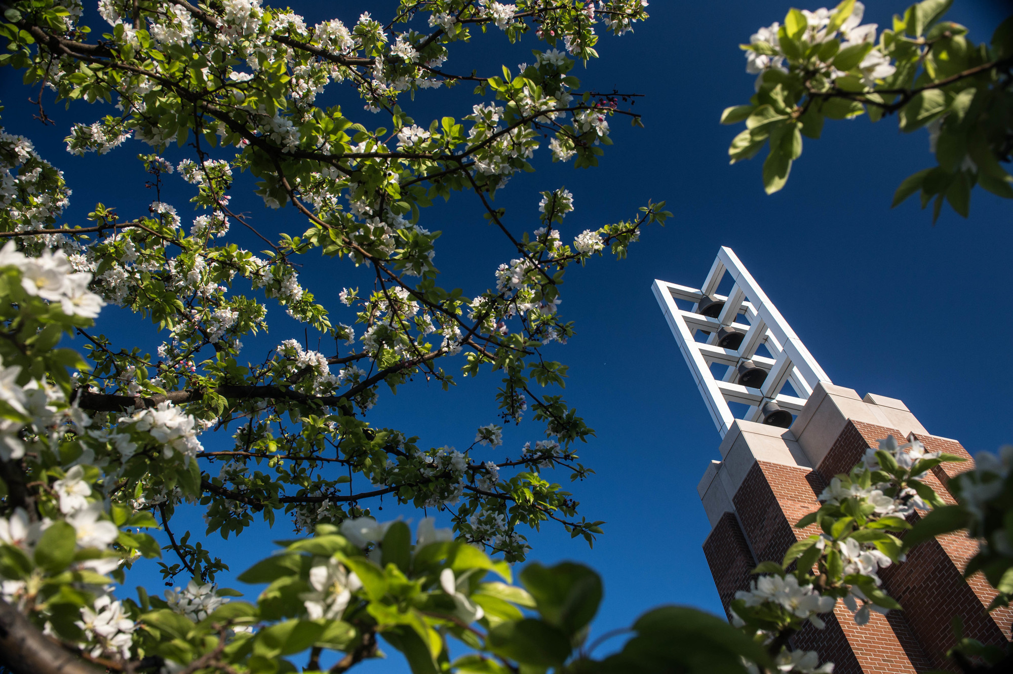 Rs650346 campus spring scenics 5 19 by michael randolph dsc 9270 lpr