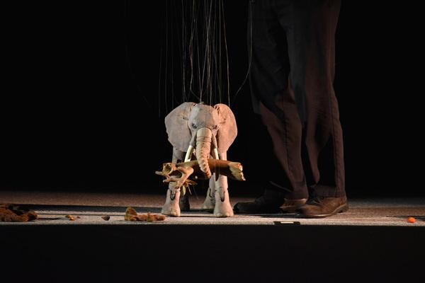 Cm elephant cashore life in motion 02 carl deutsch