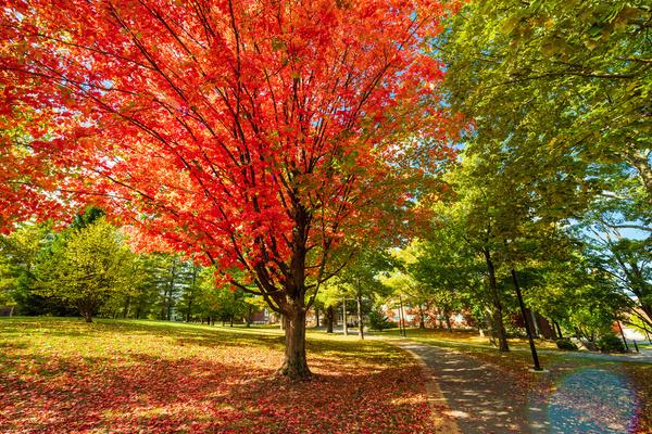 Foliage 10.19