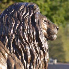 Lion280x280
