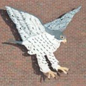 Falcon image