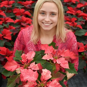 Heidi shol horticulture poinsettia
