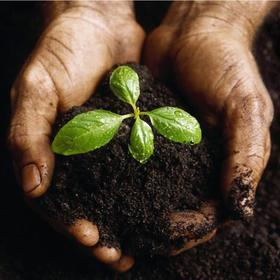 Soil hands.