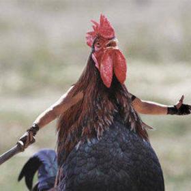 Cluck cluck motherclucker  02ce5483809128b4c9e413bcbb3e7a94