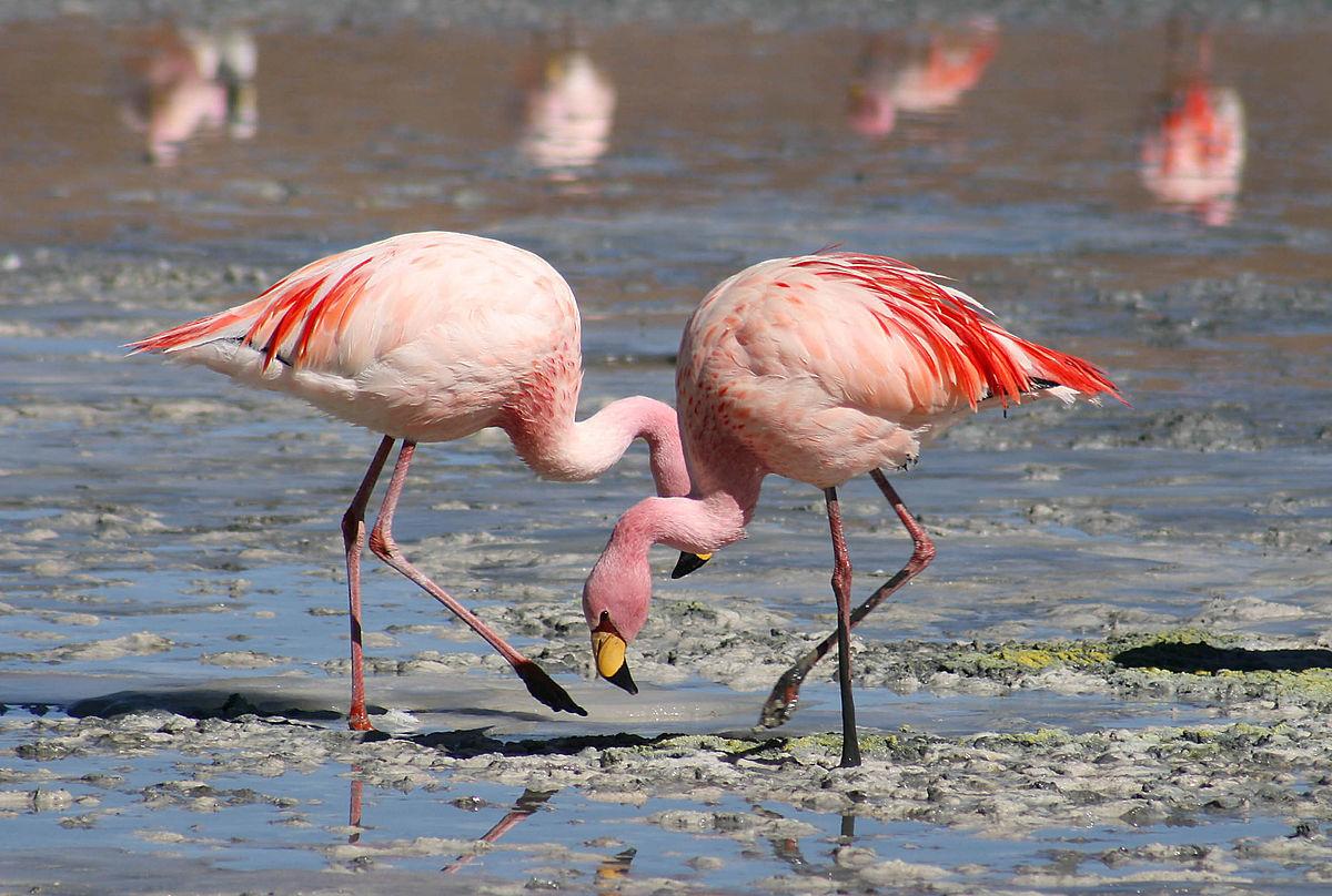 1200px flamingos laguna colorada
