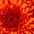 Tmp2fprofile2fphotos2f16045092fchrysanthemum