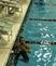 Davion Scott-Bell Men's Swimming Recruiting Profile