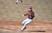 Jacob Kleckner Baseball Recruiting Profile