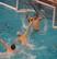 Caleb Shin Men's Water Polo Recruiting Profile