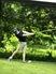 Colin Elias Men's Golf Recruiting Profile