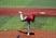 Nathan Glaser Baseball Recruiting Profile