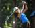 Lihini Ranaweera Women's Golf Recruiting Profile