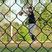 Adrian Santiago Baseball Recruiting Profile