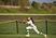 Taiylor Harrington Softball Recruiting Profile