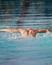 Max McClung Men's Swimming Recruiting Profile