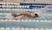 Jackson Stewart Men's Swimming Recruiting Profile