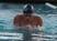 Anthony Sebastian Men's Swimming Recruiting Profile