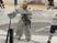 Ryan Piros Men's Ice Hockey Recruiting Profile
