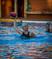 Cara Meldrum Women's Water Polo Recruiting Profile