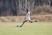 Malinn Sigler Women's Soccer Recruiting Profile