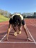 Elisha Gates Men's Track Recruiting Profile