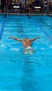 David Sturm Men's Swimming Recruiting Profile