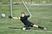 Joshua Zweydorff Men's Soccer Recruiting Profile