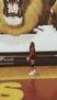 Haylie Kidd Women's Volleyball Recruiting Profile