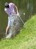 Drew Hall Men's Golf Recruiting Profile