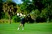 Dominic Carrera Men's Golf Recruiting Profile