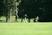 Alex Czerwinski Men's Golf Recruiting Profile