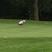 Zachary Schwarzbach Men's Golf Recruiting Profile