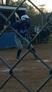 Novella Taylor Softball Recruiting Profile