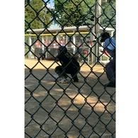Sara Flores's Softball Recruiting Profile