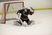 Riley Allen Men's Ice Hockey Recruiting Profile