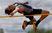 Zachary Glasser Men's Track Recruiting Profile