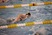 Victoria Blankenship Women's Swimming Recruiting Profile