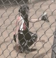 Kylie Smith's Softball Recruiting Profile