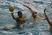 Victor Perez Men's Water Polo Recruiting Profile