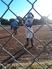 Shelby Reeder Softball Recruiting Profile