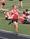 Athlete 300105 small