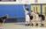 Emma Monteleone Women's Basketball Recruiting Profile