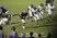 Demarien Johnson Football Recruiting Profile