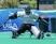 Ellie Todd Field Hockey Recruiting Profile