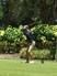 "Casey ""McLean"" Morton Men's Golf Recruiting Profile"