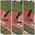 Tanijal Matthews Women's Track Recruiting Profile