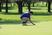 Maxwell Schmitz Men's Golf Recruiting Profile