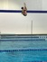 Megan Phifer Women's Diving Recruiting Profile