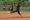Athlete 380115 small